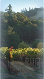 Benchland vineyard